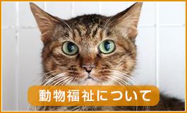 動物福祉について